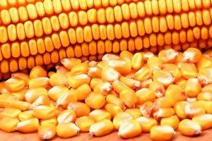 मकै उत्पादक कृषकलाई अनुदानमा कृषि सामग्री वितरण