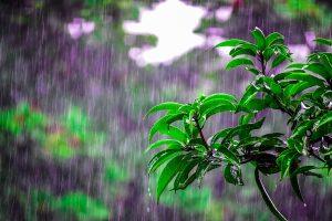 पूर्वबाट मनसुन प्रवेश गर्दै, केही दिनभित्रै वर्षा बढ्ने